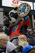 KELOWNA, CANADA - APRIL 07:  Rocky Raccoon at the Kelowna Rockets game on April 07, 2017 at Prospera Place in Kelowna, British Columbia, Canada.  (Photo By Cindy Rogers/Nyasa Photography,  *** Local Caption ***