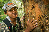 Rimbang Baling Wildlife Sanctuary, Sumatra, Indonesia, August 2017. Rimbang Baling Wildlife Sanctuary, Sumatra, Indonesia, August 2017. WWF  tiger research programme coordinator Febri A. Widodo inspects the claw marks of a sunbear. International volunteers of Biosphere Expeditions work together with local scientists of the WWF project to  protect the Sumatran Tiger. The 'citizen scientists' survey the rainforest on foot and in boats, looking for tracks, kills, scats and the animals themselves, and setting camera traps. They also work with local people on capacity-building and creating local incentives for tiger conservation. All this in an effort to mitigate human-wildlife conflict and create strategies to ensure the survival of the critically endangered Sumatran tiger into the future. Photo by Frits Meyst / MeystPhoto.com International volunteers of Biosphere Expeditions work together with local scientists of the WWF project to  protect the Sumatran Tiger. The 'citizen scientists' survey the rainforest on foot and in boats, looking for tracks, kills, scats and the animals themselves, and setting camera traps. They also work with local people on capacity-building and creating local incentives for tiger conservation. All this in an effort to mitigate human-wildlife conflict and create strategies to ensure the survival of the critically endangered Sumatran tiger into the future. Photo by Frits Meyst / MeystPhoto.com