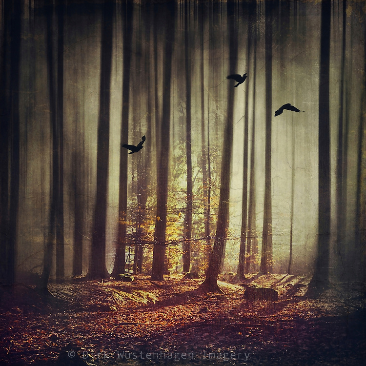 Surreal forest scenery in backlight - manipulated photograph