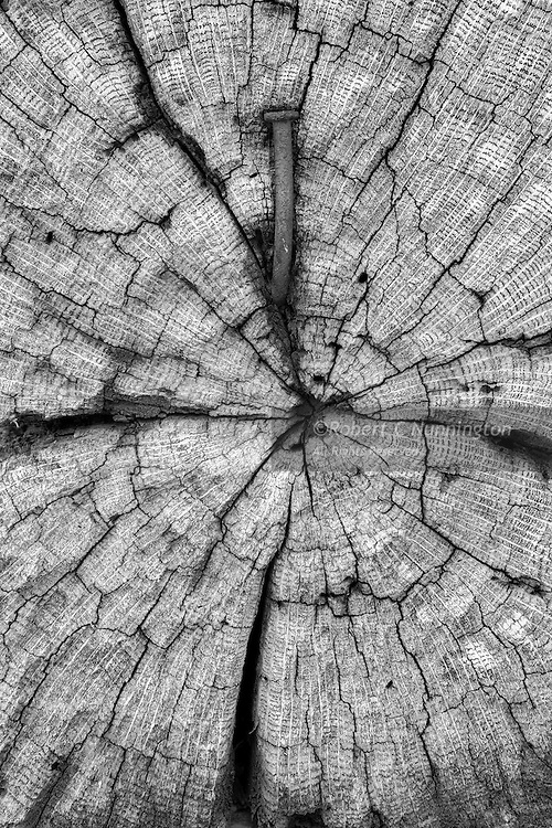 Aged wood from the1800's showing the ravages of time. The Dan Lawson Place was originally built by Peter Cable in the 1850s and acquired by son-in-law Dan Lawson (1827–1905) after he married Mary Jane, Cable's daughter. Lawson was a relatively affluent resident, owning a sunstantial strip of land in Casdes Cove. He built several other additions to the homestead, including a smokehouse, a chicken coop, a second story to the cabin and a hay barn. The cabin had a brick chimney, which was unusual in the location for the time.