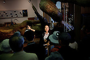 Yakushima, June 2011 - A guide talking in front of a branch from Jomon Sugi (oldest cedar tree in Yakushima) to a group of Japanese tourists at Yakusugi museum..Yakushima cedar forest is part of UNESCO's world heritage since 1993..Around 400,000 tourists came to the island in 2010.