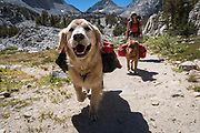 Woman backpacking with dogs (golden retrievers) in the Little Lakes Valley, John Muir Wilderness, Inyo National Forest, California