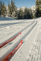 The tracks are perfectly groomed at the Whistler Olympic Park, near Whistler, BC Canada