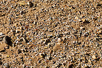 Small rocks in the mud along the San Rafael River