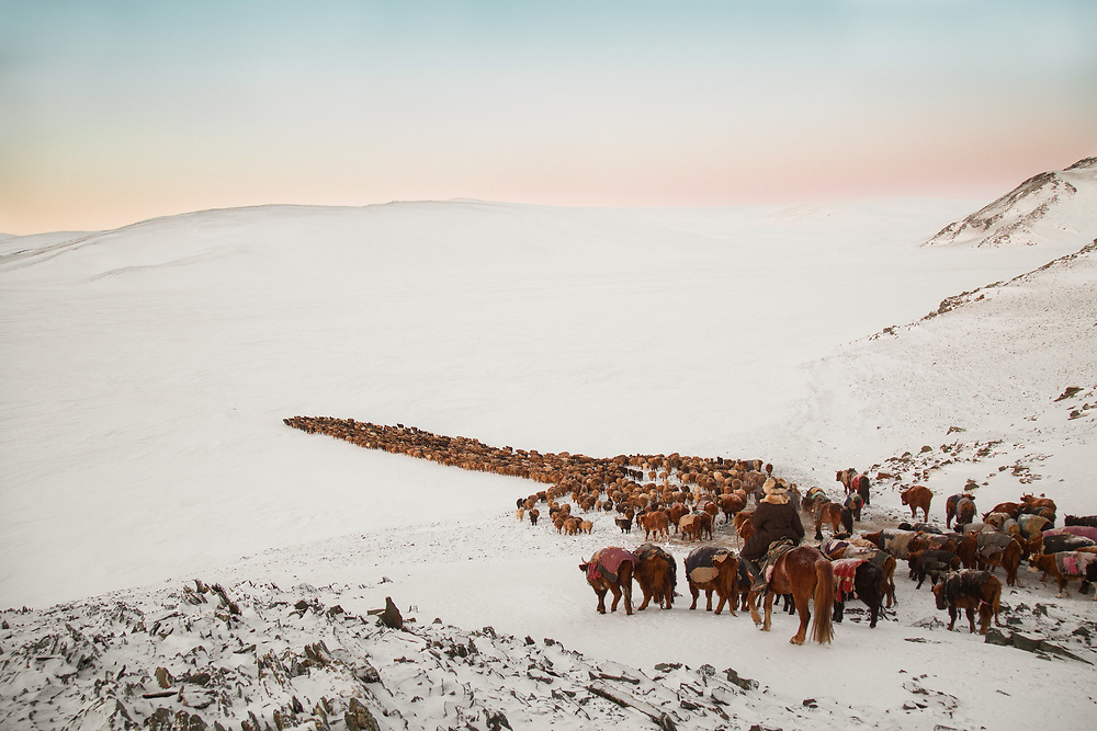 In order to cover the daily 35Km journey in daylight, the herd needs to depart first thing in the morning. Although temperatures at this time time of the day can reach -35C the scenery is quite spectacular.