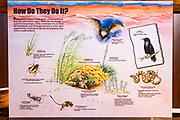 Interpretive sign, Coral Pink Sand Dunes State Park, Kane County, Utah USA
