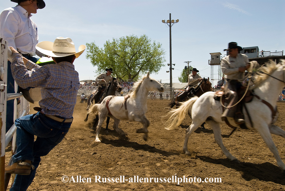 Pickup men Jay Shaw, Kyle Shaw and Lynn Ashley pick up bareback bronc, Miles City Bucking Horse Sale, Montana, <br /> Model Released three riders only.
