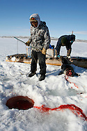 Sasa Samson, age 37, the best Inuit hunter in the Inuit town of Resolute Bay, Canada, pulls a seal from its breathing hole on Tuesday, June 12, 2007.  Sasa hunts seals for food, and his community uses every part of the seals, either eating the meat or using the hides to make warm clothes. Sasa often stands next to the breathing hole of the seal without moving for 30 minutes or more to capture the animal with with his hooked stick when it rises to the surface to breathe.   ..Standing beside Sasa and holding a gaff (a traditional tool used to hook seals) is P.J., aged 17, who often accompanies Sasa on the hunts.  .. The traditional way of life in the Resolute Bay Inuit community is being threatened by rising temperatures.  The dangers of global warming, which have been extensively documented by scientists, are appearing first, with rapid, drastic effects, in the Arctic regions where Inuit people make their home.  Inuit communities, such as those living on Resolute Bay, have witnessed a wide variety of changes in their environment.  The ice is melting sooner, depleting the seal population and leaving them unable to hunt the animals for as long.  Other changes include seeing species of birds and insects (such as cockroaches and mosquitoes) which they have never encountered before.  The Inuit actually lack words in their local languages to describe the creatures they have begun to see.
