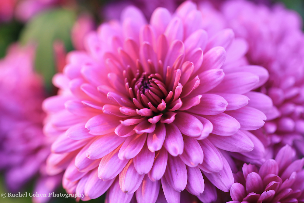 &quot;Mums the Word&quot;<br />