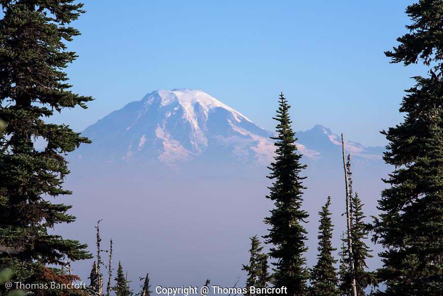 Mt Rainier rises through a sea of smoke and fog. The smoke has drifted from the Cougar Creek fire on the southeast side of Mt Adams.
