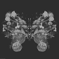 black & white image of flower butterfly