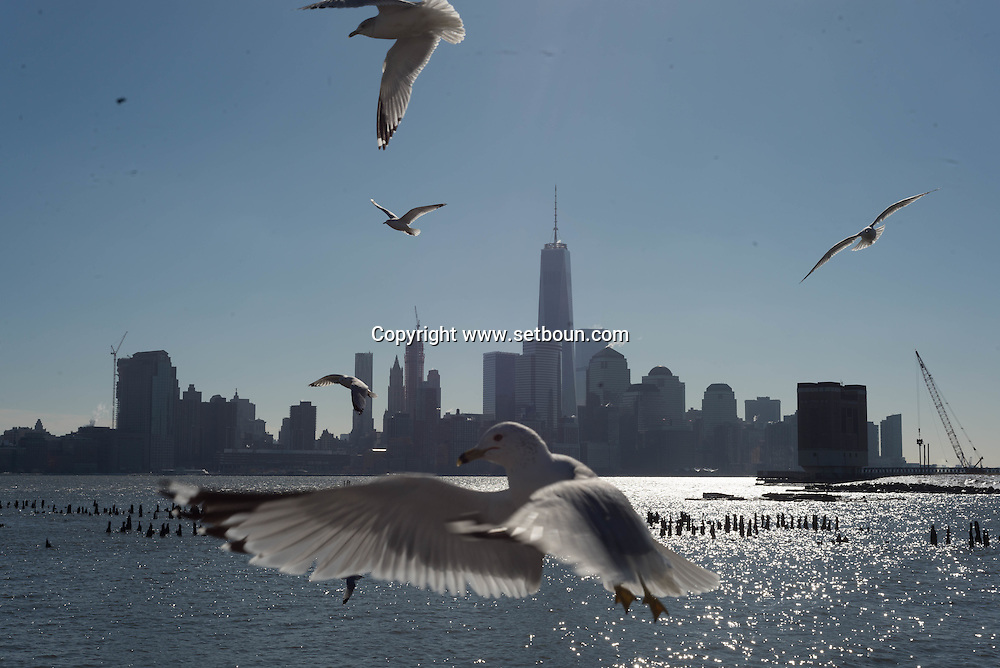 New York view from Hoboken New Jersey  ,   United states   / des mouettes et le skyline de Manhattan Dowtown, l Hudson river, vue depuis Hoboken New Jersey  New York Etats-unis