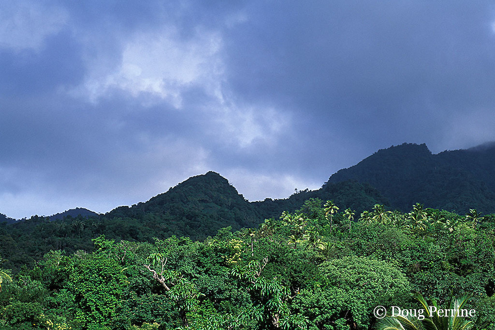 rainforest, Dominica, West Indies ( Eastern Caribbean )