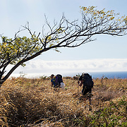 Keauhou Trail, Hawaii Volcanoes National Park, Big island, Hawaii.