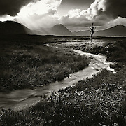 HONORABLE MENTION - International photography awards <br /> <br /> The Blasted tree, Rannoch Moor.<br /> <br /> I clocked the sky moving fast from left to right ahead of me driving down the A82 towards Glencoe and glorious shafts began to dance as the sun became partially obscured by thick black cloud. The exact location of this tree had always eluded me until this moment, I pulled up sharply and swung the car into a gravelled lay-by having spotted it, much nearer to the road that I had envisioned. Alas the tree is no more, mabye a good thing? I think everyone and their dog has had a go at this location and some amazing shots out there of this iconic scene, this shot was my first and last of it.