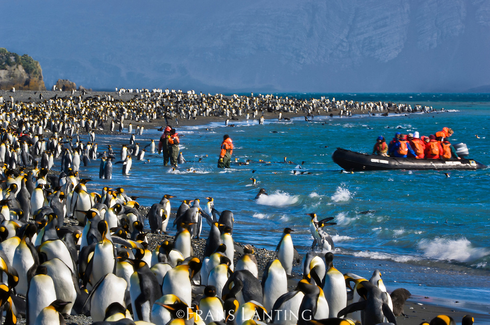 Tourists visiting king penguin colony, Aptenodytes patagonicus, South Georgia Island