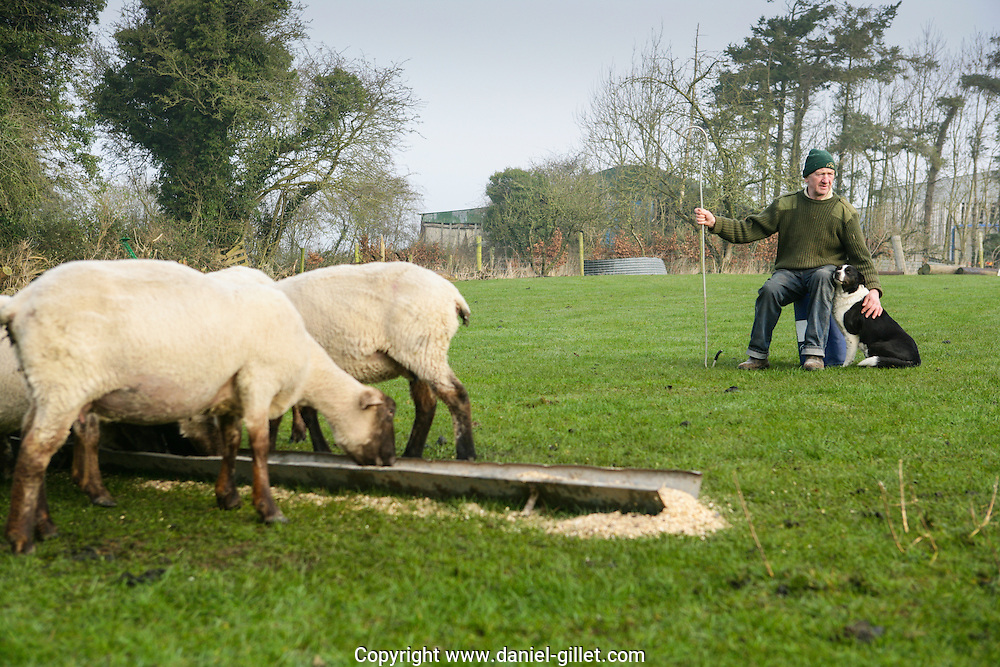 Portrait de MArthy, eleveur de moutons a Ballacolla, Irlande //Portrait of Marthy, sheep breeder in Ballacolla, Irland