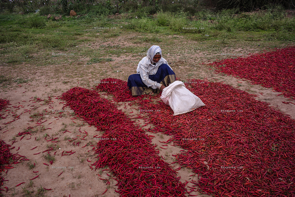 A woman sorts chillies as its sits to dry in village Gorikothapally, Telangana, Indiia, on Friday, February 8, 2019. Photographer: Suzanne Lee for Safe Water Network