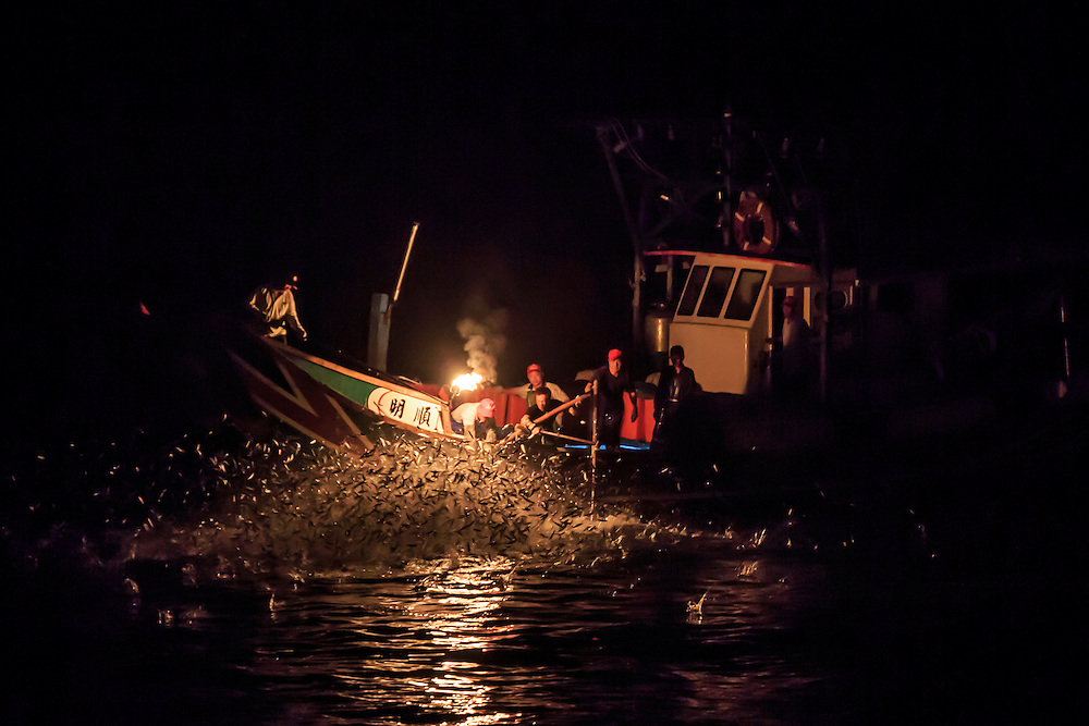 Fishermen reach over with nets to catch the leaping fish in the traditional art of fire fishing.