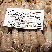 """Local """"Canocce"""" are on display at one of the fishmongers at the Rialto Market. The Biennale del Gusto is an exhibition held over four days, dedicated to traditional food and drinks from all regions of Italy."""