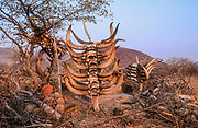 Tomb of an important clan leader with cattle Skulls slaughtered on the grave to serve him in the afterlife. Himba village, Kaokoveld, Namibia, Africa