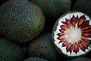 Urubici_SC, Brasil.<br /> <br /> Imagens da Serra Catarinense em Urubici, Santa Catarina. Na foto detalhe de Pinhao.<br /> <br /> Urubici, Santa Catarina. In this photo pinaceae fruit.<br />  <br /> Foto: JOAO MARCOS ROSA / NITRO