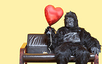 Young man dressed in gorilla costume holding heart shaped balloon sitting on sofa over colored background