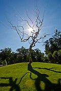 The entrance at Crystal Bridges Museum of American Art in Bentonville, Ark., showcases a sculpture by Roxy Paine titled Yield, as seen on Monday, June 10, 2013.