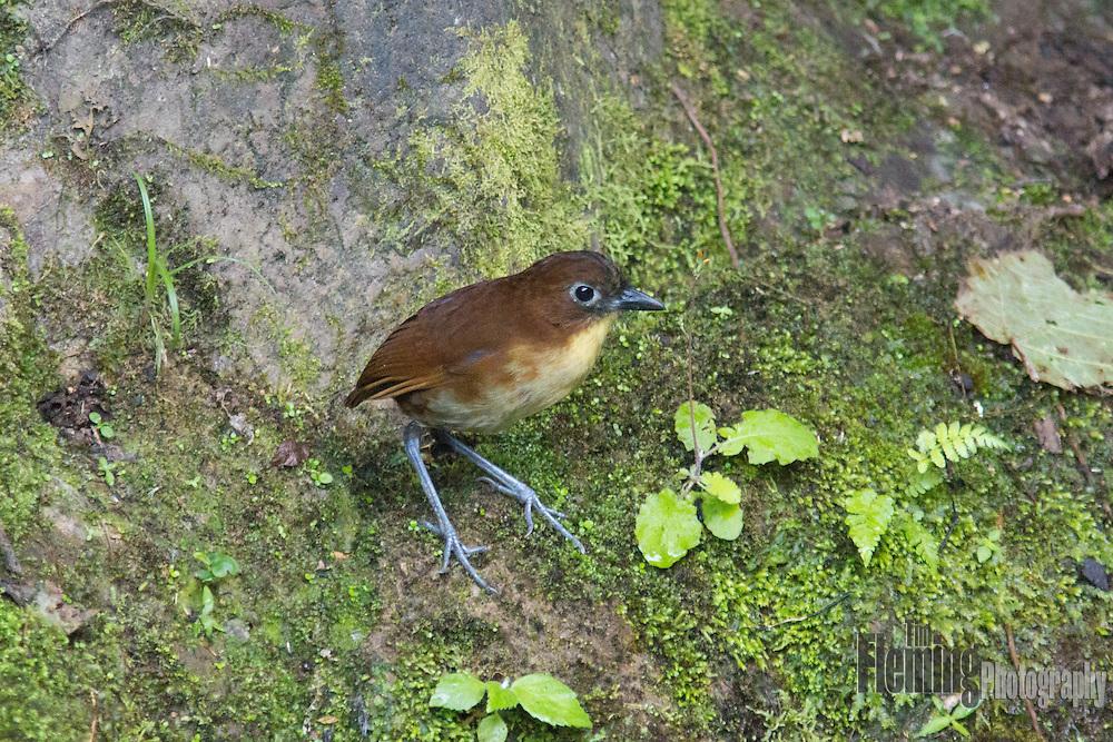 Refugio Paz de las Aves, Ecuador