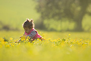 Young girl in a field of yellow wildflowers Model released