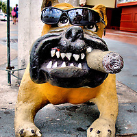Bulldog with Cigar and Sunglasses in San Miguel, Cozumel, Mexico <br />