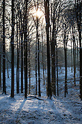 """Winter snow in the Sonian Forest, Foret de Soignes, or Zoniënwoud, an 11,000 hectare woodland to the southeast of Brussels, providing a """"green lung"""" for the polluted, traffic choked city. The forest is currently in three jurisdictions, Brussels, Flanders and Wallonia, but EU involvement in 2013 will see development of plans to re-unify the forest, for the benefit of humans and wildlife."""