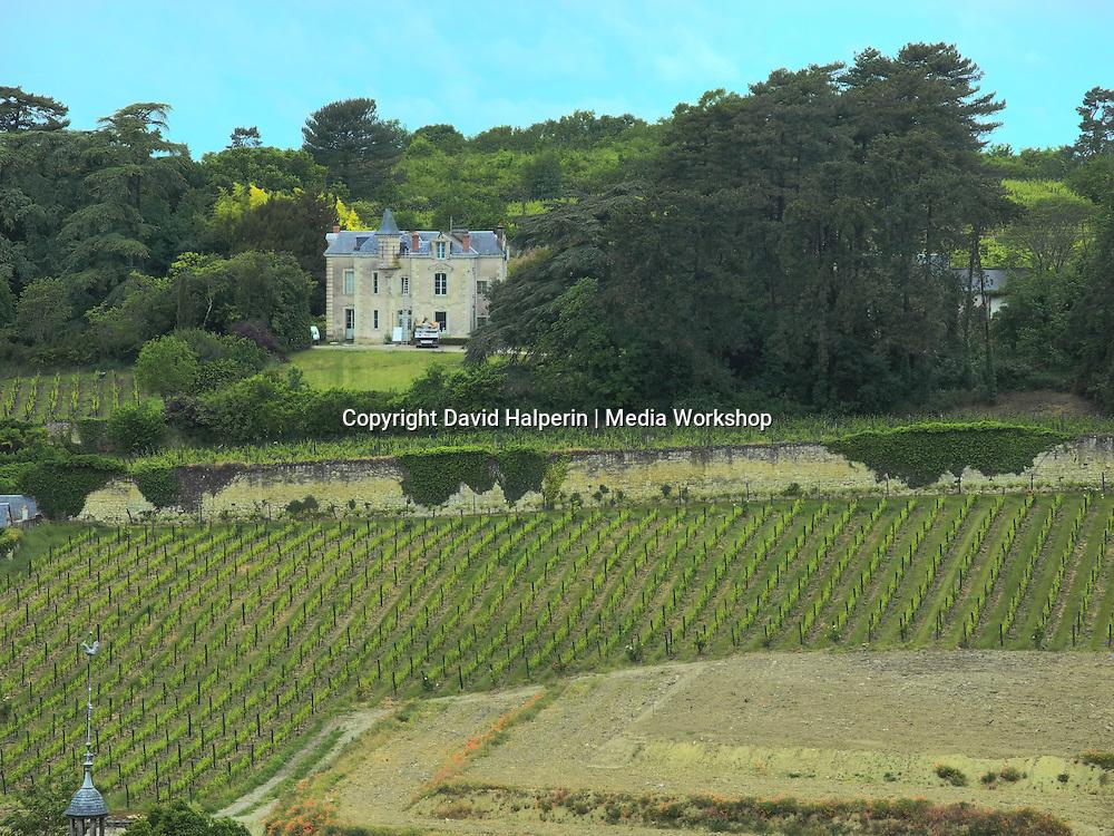 Vineyards, Chinon