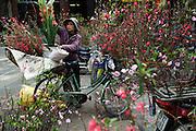 A flower seller plies her trade in the Old Quarter of Hanoi for Tet