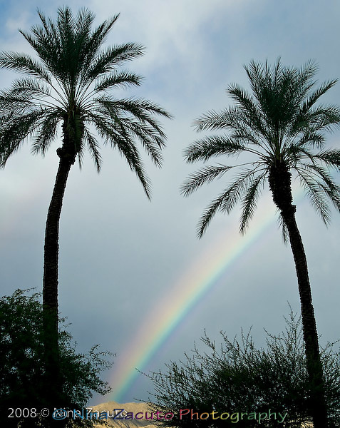 Rainbow in the desert falls between the palm trees.