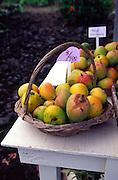 Mangos, fruit stand<br />