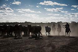 Vaqueiro na regiao do Agreste Pernambucano./Cowboy in Northeas, agreste Pernambuco.Foto Adri Felden/Argosfoto