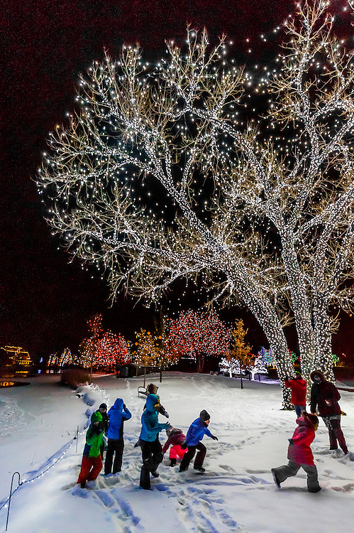 Children playing in snow, A Hudson Christmas (holiday light show at Hudson Gardens), Littleton, Colorado USA.