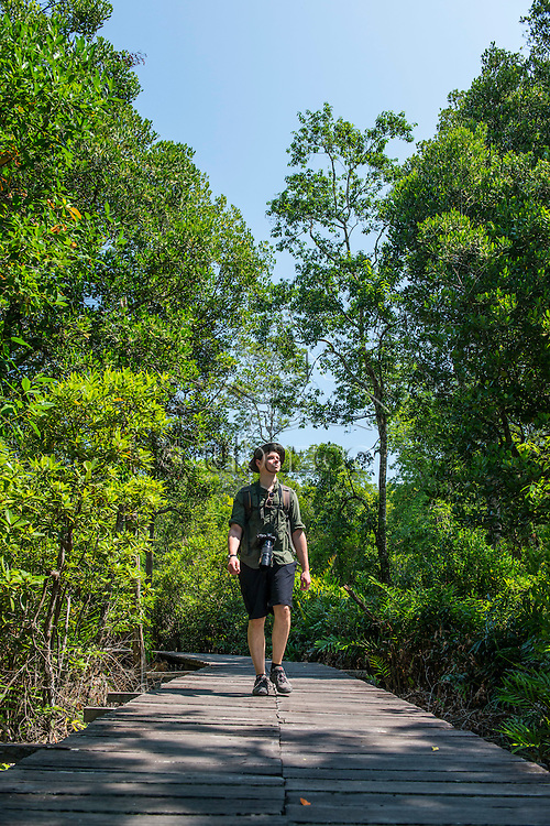 A tourist walking along a platform over mangroves, surrounded by trees, Labuk Bay Proboscis Monkey Sanctuary, Sabah, Malaysia.