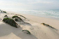 Open pristine beaches of De Mond Nature Reserve, De Mond Nature Reserve, Western Cape, South Africa