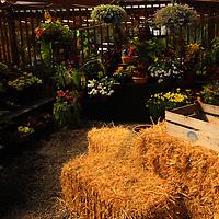 Cornell Farms