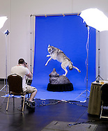 A wolf is beeing photographed by the Breaktrough magazine.<br /> The wolf is made by CAROLIN BRAK-DOLNY, Frankford, ON, Canada