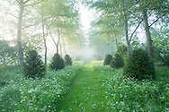 Mown grass path through wildflower meadow in birch woodland, avenue of clipped yew shrubs