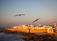 Sea gulls hover near the ramparts of Essaouira, Morocco. The old city is bathed in late day light just before sunset.  The city's medina has been named a UNESCO World Heritage site. The city lies on the Atlantic coast of Morocco in northern Africa.