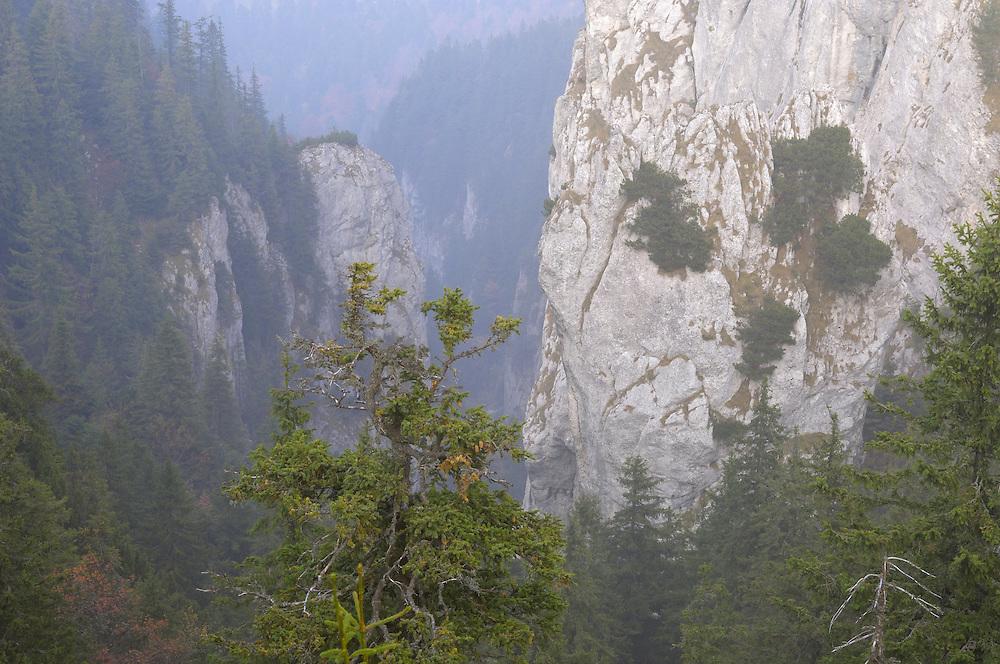 Limestone rocks in Valea Crapaturii, National Park Piatra Craiului, Transylvania, Southern Carpathians, Romania