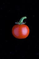 .Solanum gilo