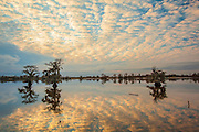 Cypress trees reflected in Blackwater river at sunset