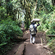 Porters carrying their loads on the muddy Mweka Trail on Mt Kilimanjaro.