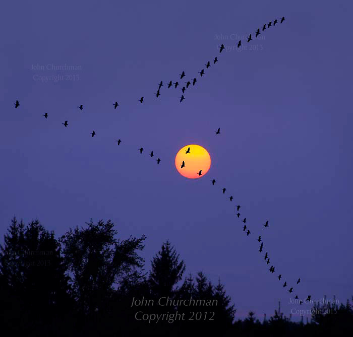 setting sun with geese in v formation