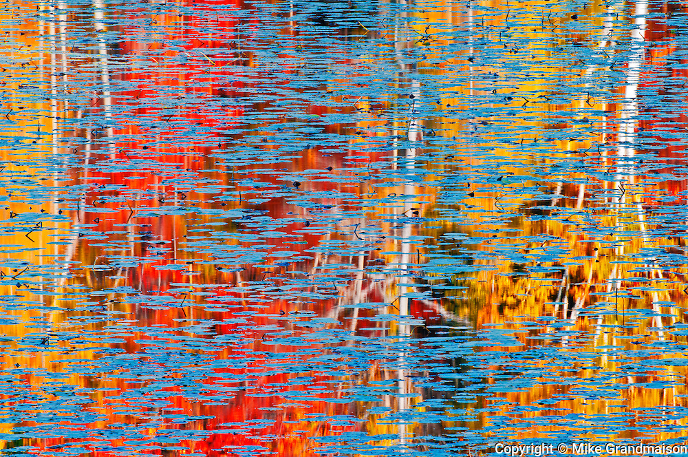 Reflection of autumn colored forest trees in pond of water lilies<br /> Minden<br /> Ontario<br /> Canada